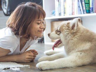 Jak wybrać rasę psa dla siebie?