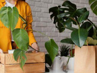 Czy wiesz dlaczego rośliny doniczkowe marnieją?