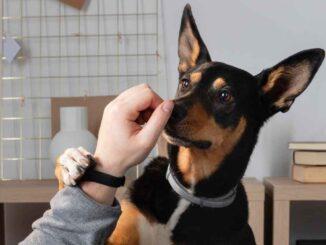 Psi nos rozróżnia i rozpoznaje do 4000 różnych zapachów